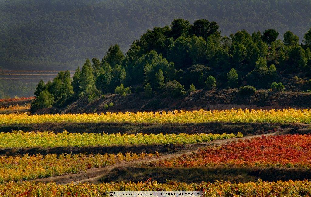 田野 风景 树林 树木 秋天 葡萄 葡萄园 我的图片 旅游摄影