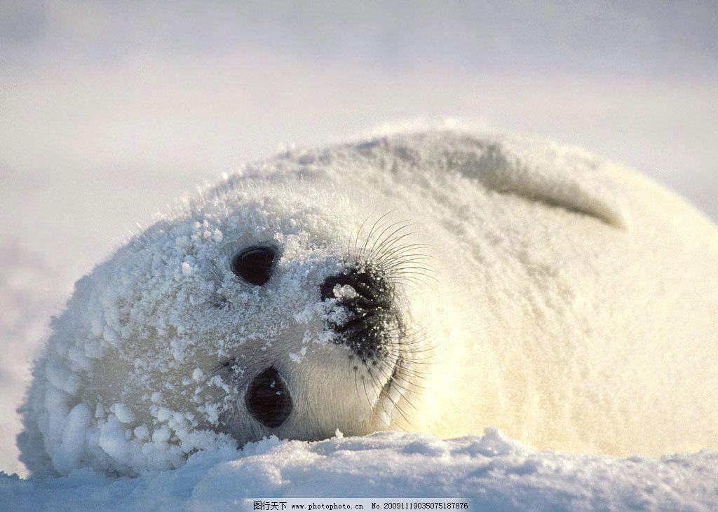 桌面背景图 北极熊 桌面 桌面图 熊 野生动物 生物世界 摄影 100dpi j