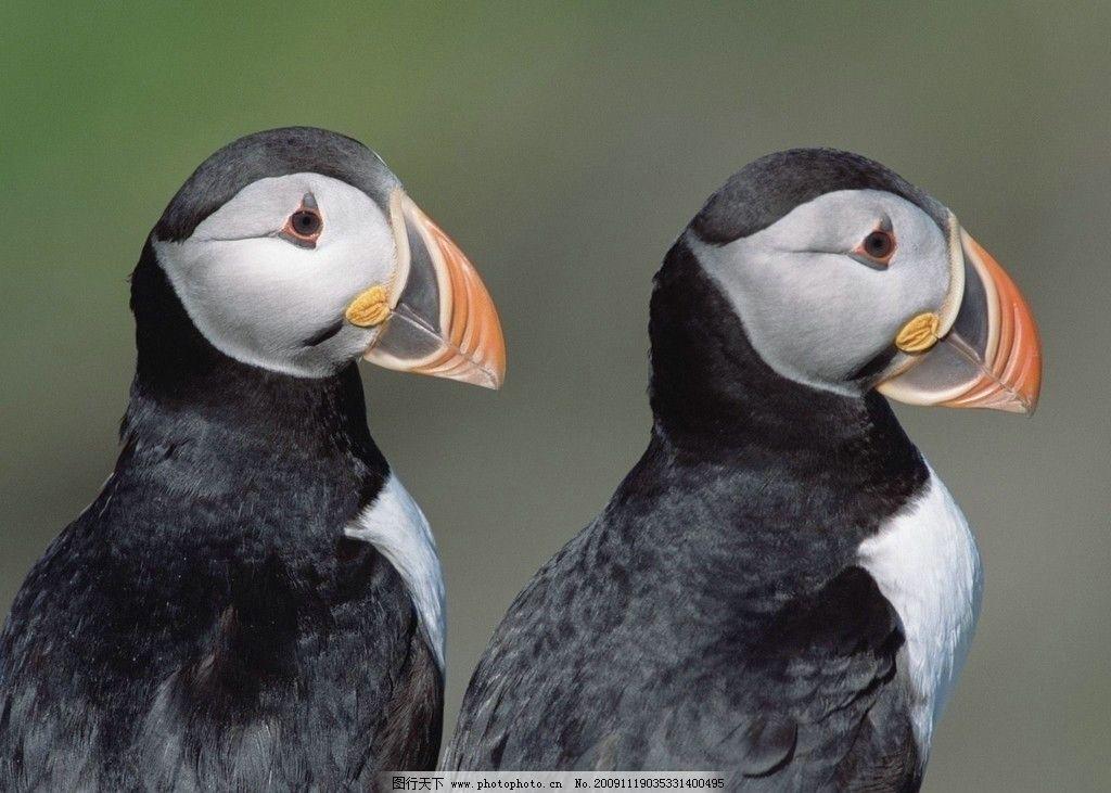 壁纸 动物 鸟 鸟类 1024_731
