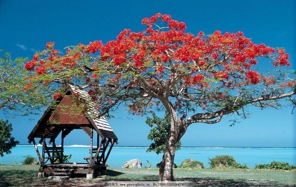 风景树qq头像 花朵
