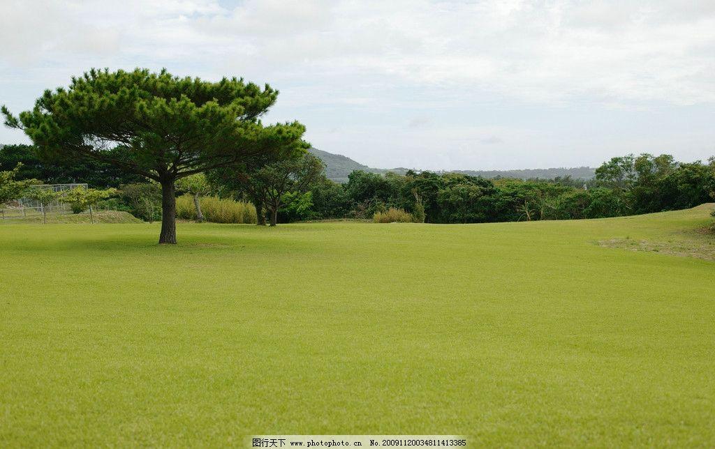 草坪 草 草场 风景 绿草 一棵树 自然风景 自然景观 摄影 350dpi jpg