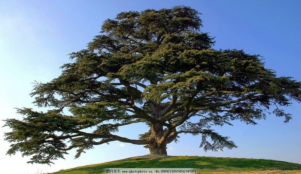 参天大树 枝叶 茂盛 天空 蓝天 宽阔 草地 古树 茂密 自然风景