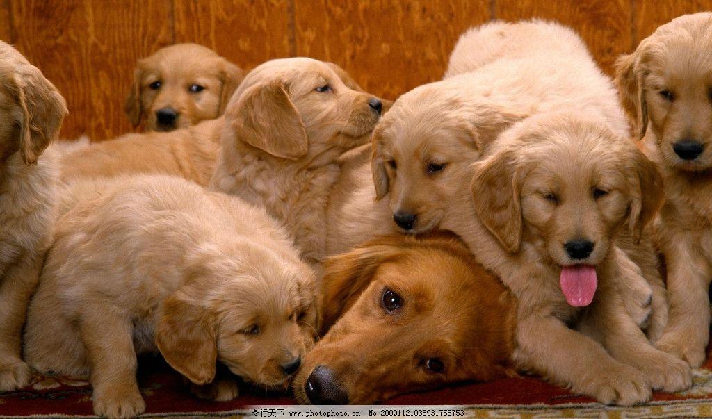 狗狗写真 可爱小狗 高精度