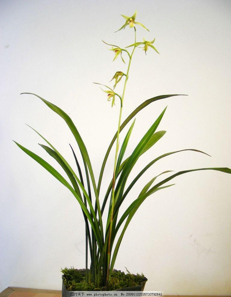 壁纸 花 盆景 盆栽 植物 桌面 768_987 竖版 竖屏 手机