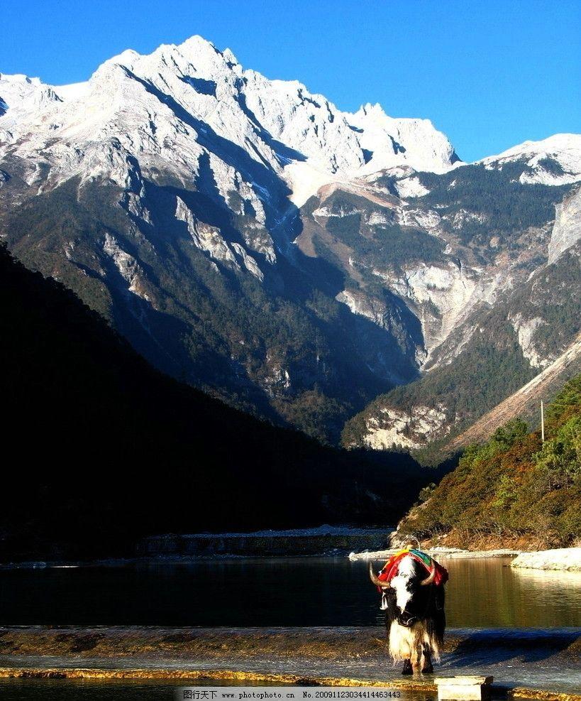 玉龙雪山 雪山 牦牛 天池 山水风景 自然景观 摄影 180dpi jpg