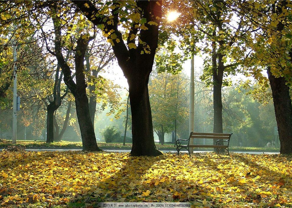 秋天的林荫 太阳 树林 影子 椅子 惬意 温暖 夕阳 自然风景