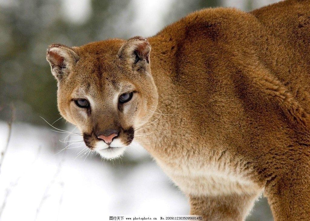 高清壁纸 豹 动物 高清 壁纸      野生动物 生物世界 摄影 72dpi jpg