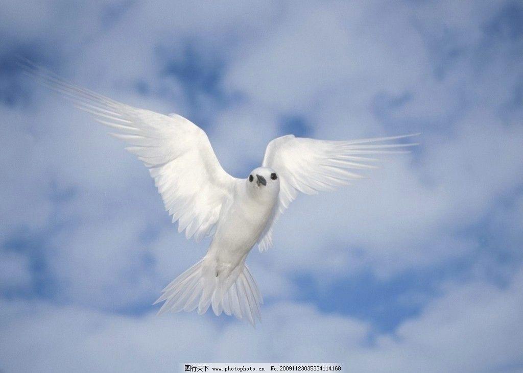 高清壁纸 鸟 天空 高清 壁纸      鸟类 生物世界 摄影 72dpi jpg