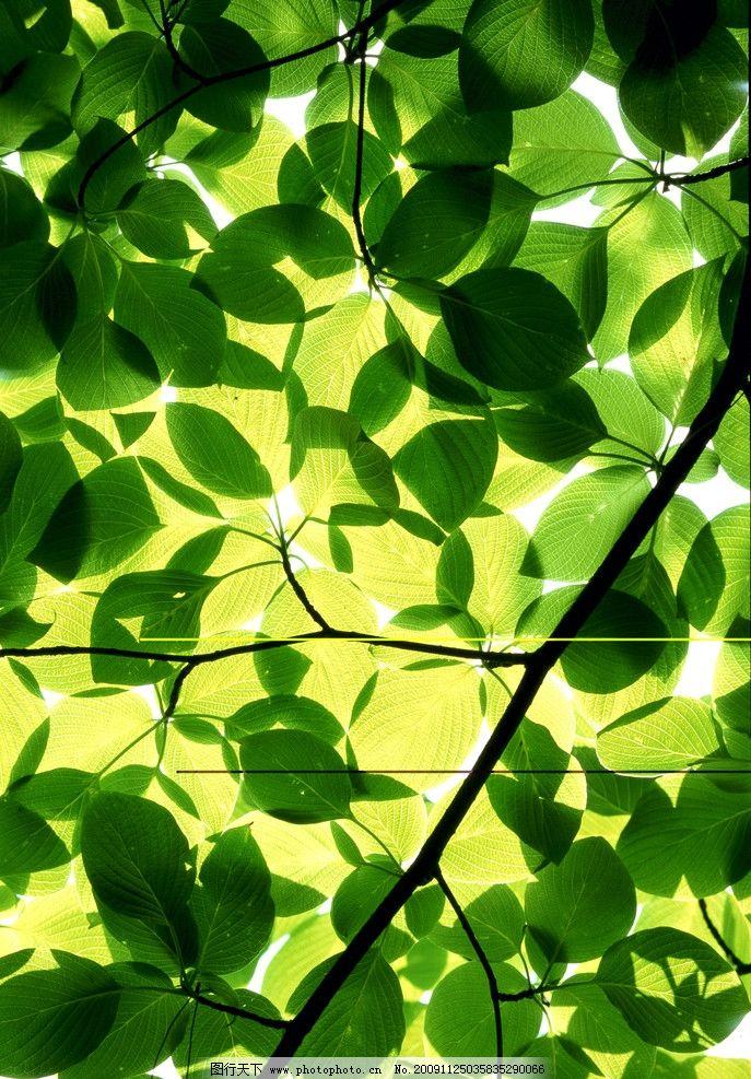 花草落叶 花草 落叶 秋风 蓝天 枯树枝 背景 金色落叶 自然之美 自然