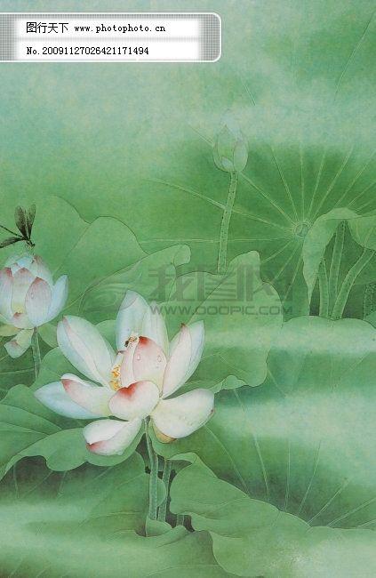 国画荷花 国画荷花免费下载 荷叶 花蕾 蜻蜒 图片素材 风景生活旅游餐