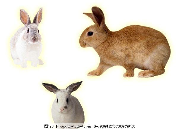 兔子 小白兔