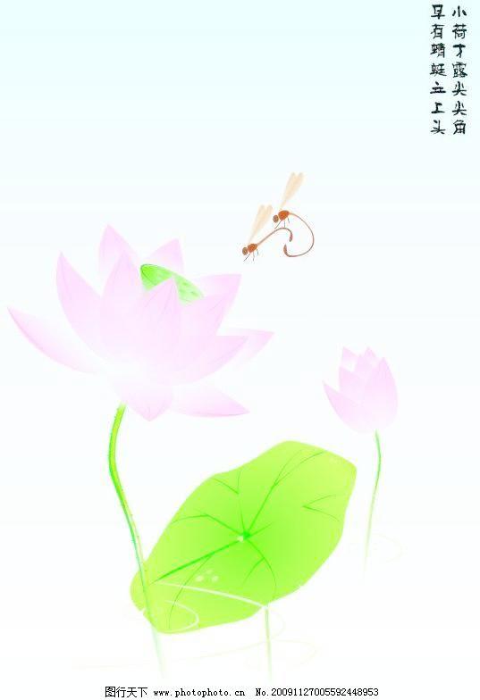 蜻蜓荷花 蜻蜓荷花图片免费下载 荷叶 花草 莲花 生物世界 矢量图