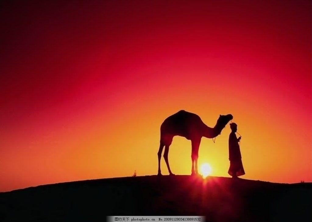 梦驼铃 骆驼 夕阳 落日 日落 日出 沙漠 自然风景 自然景观 摄影 72dp