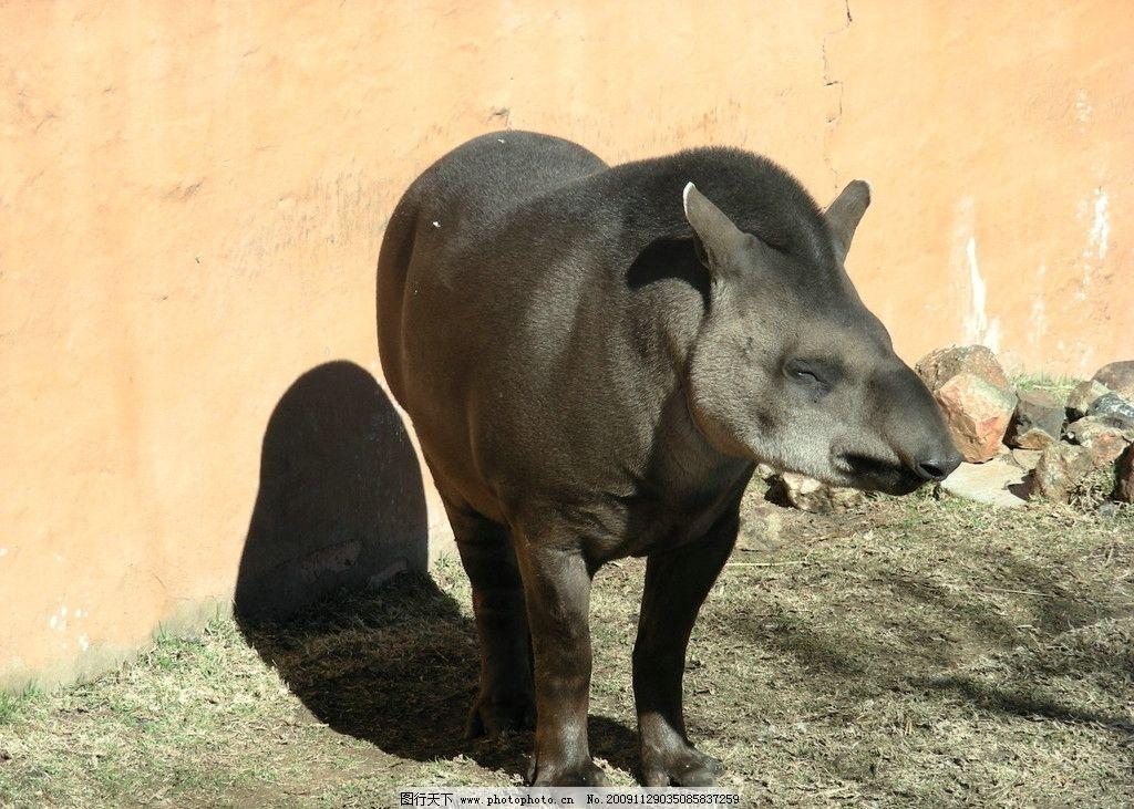 四不象 原始动物 牛 马 鹿 羊 野生动物 生物世界 摄影 300dpi jpg