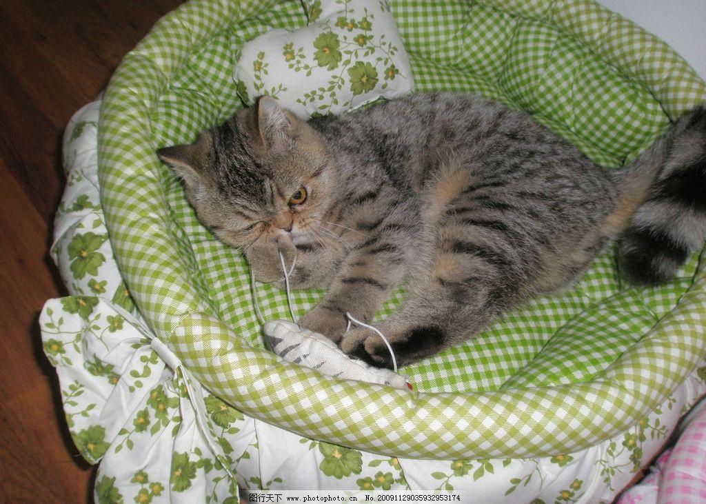 可爱猫咪 玩耍 猫窝 摄影