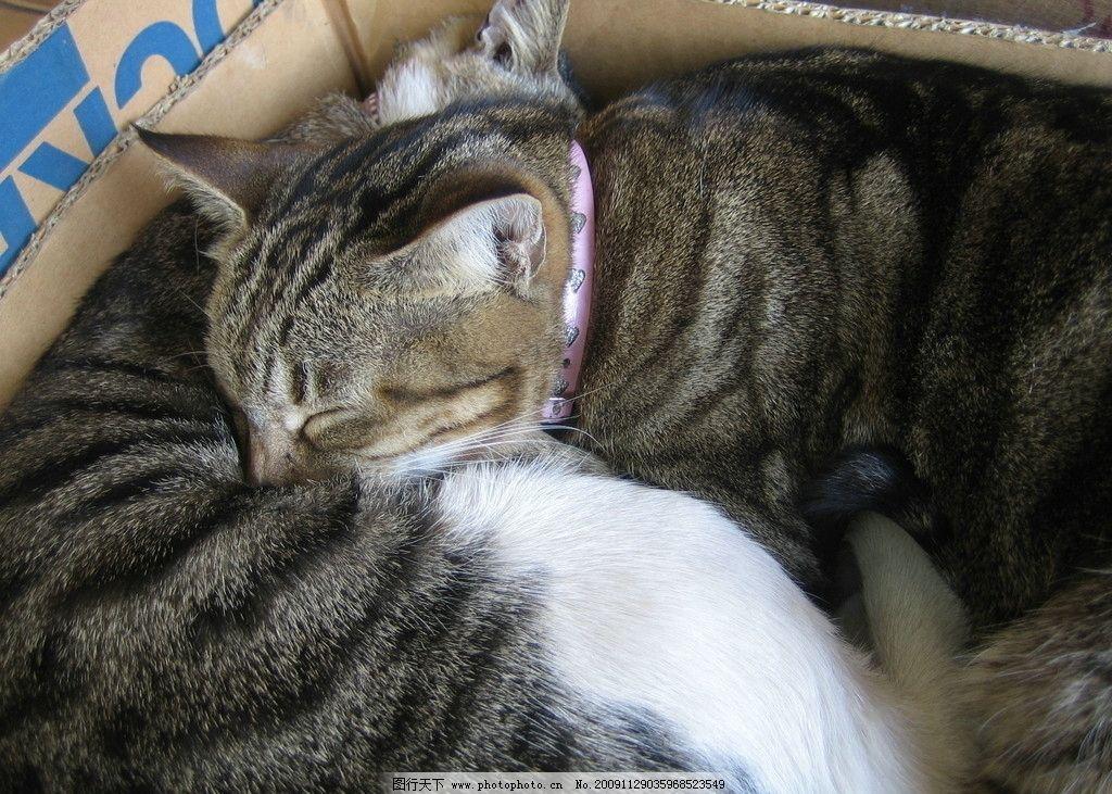 猫咪图片,可爱 睡觉中的猫咪 猫猫 摄影-图行天下图库