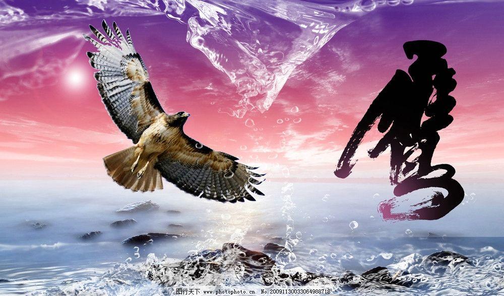 飞翔的老鹰 鹰 水 云彩
