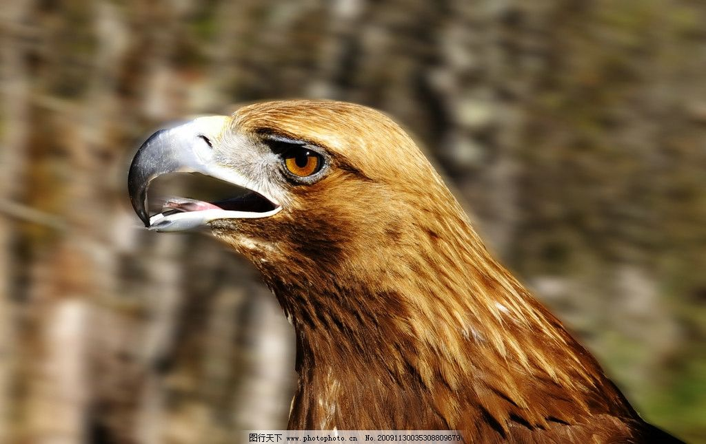 壁纸 动物 鸟 鸟类 雀 桌面 1024_645