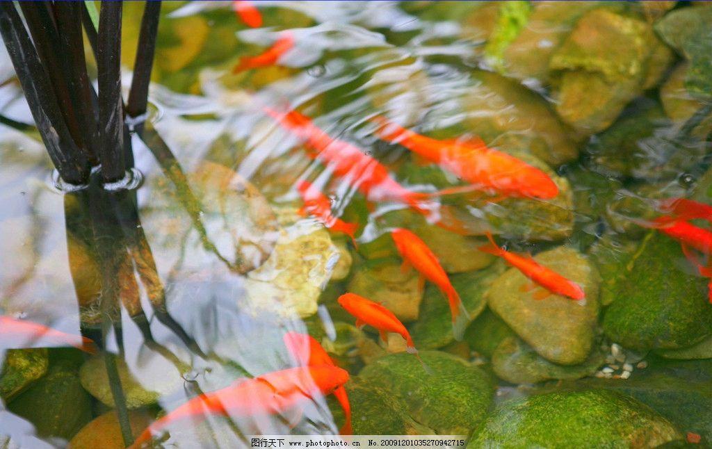 鱼翔浅底 自然 景观 景象 生物 动物 湖泊 池塘 树枝 鱼群 水色 鱼类