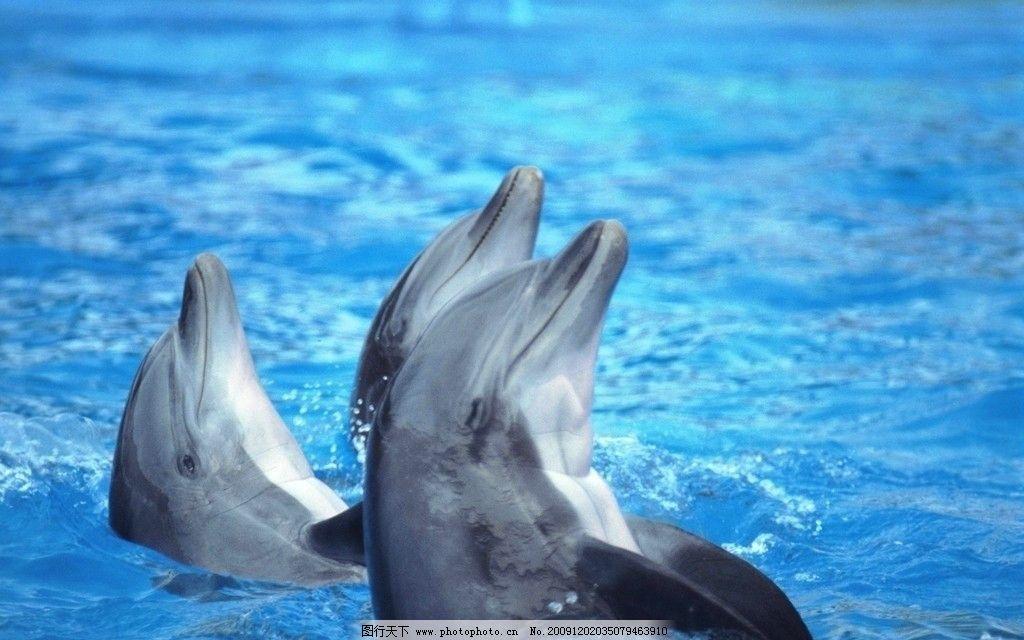 海豚 水 亲 可爱 动物世界 野生动物 生物世界 摄影 72dpi jpg