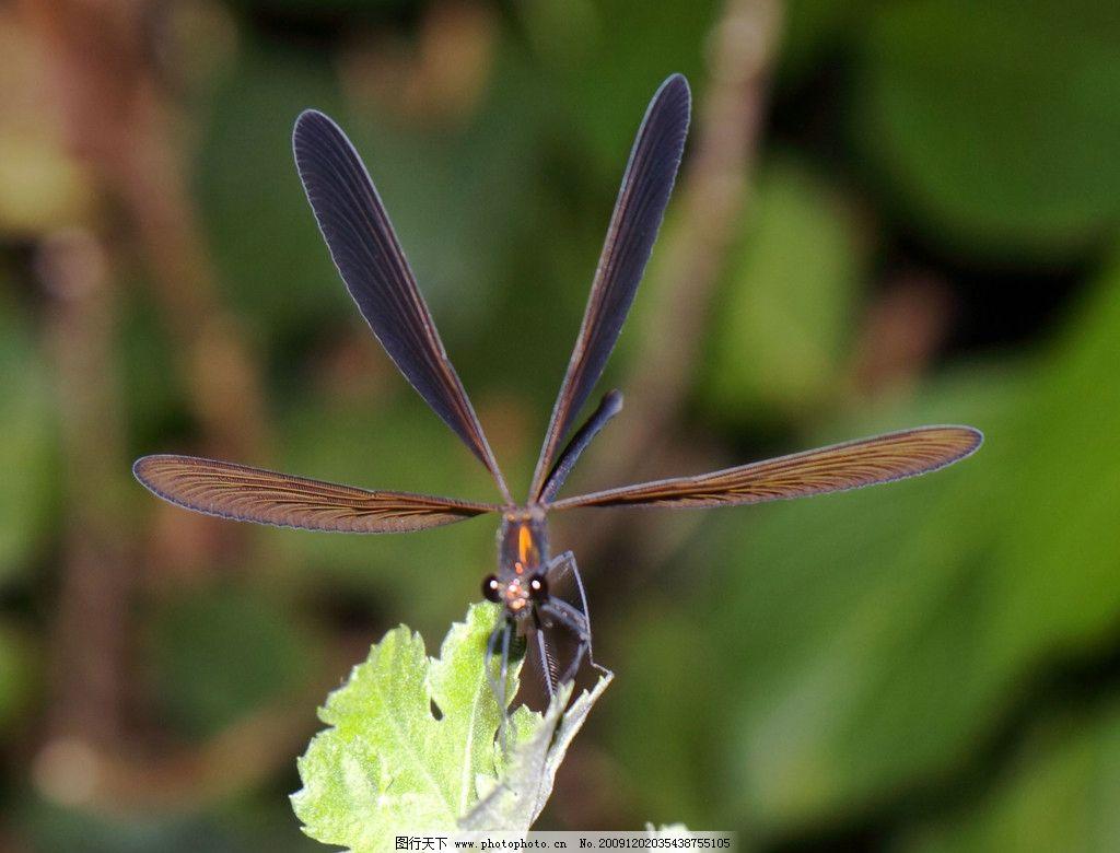 蜻蜓 复眼 头部 特写 翅膀 枝叶 微观世界 生物世界 昆虫 摄影图库