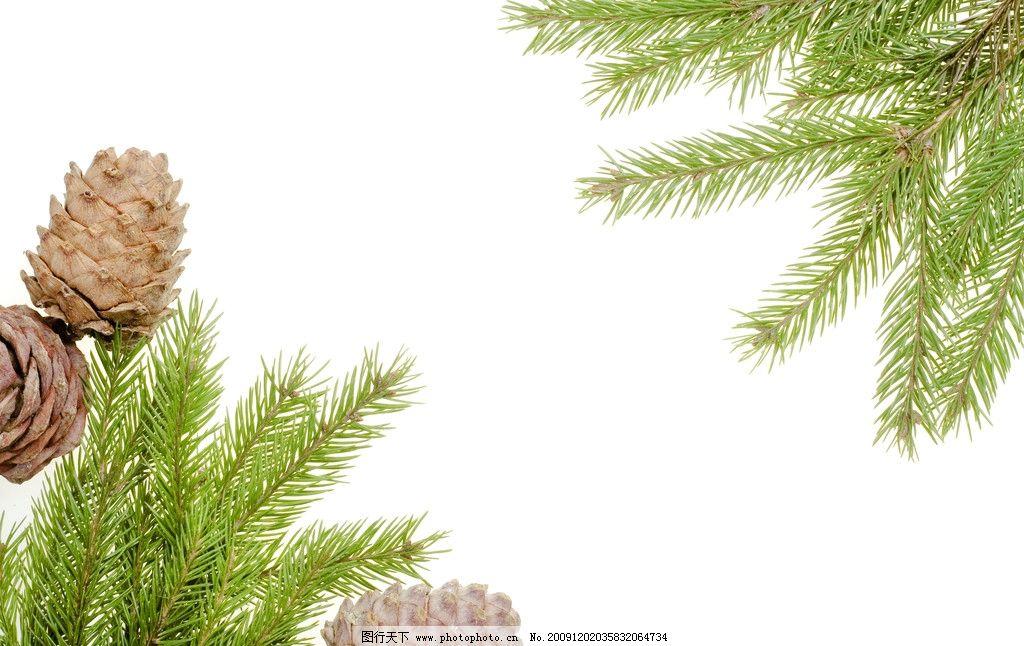 圣诞树图片_树木树叶_生物世界_图行天下图库