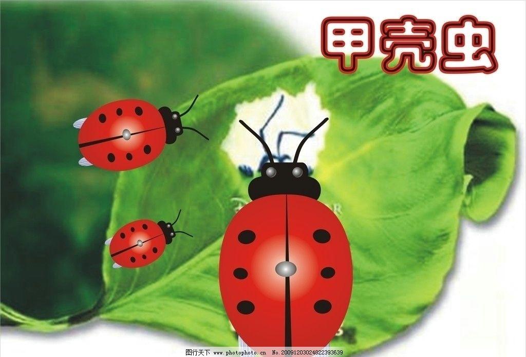 瓢虫 昆虫 植物 飞虫 绿叶 星瓢虫 绿色 风景 春天 自然生物