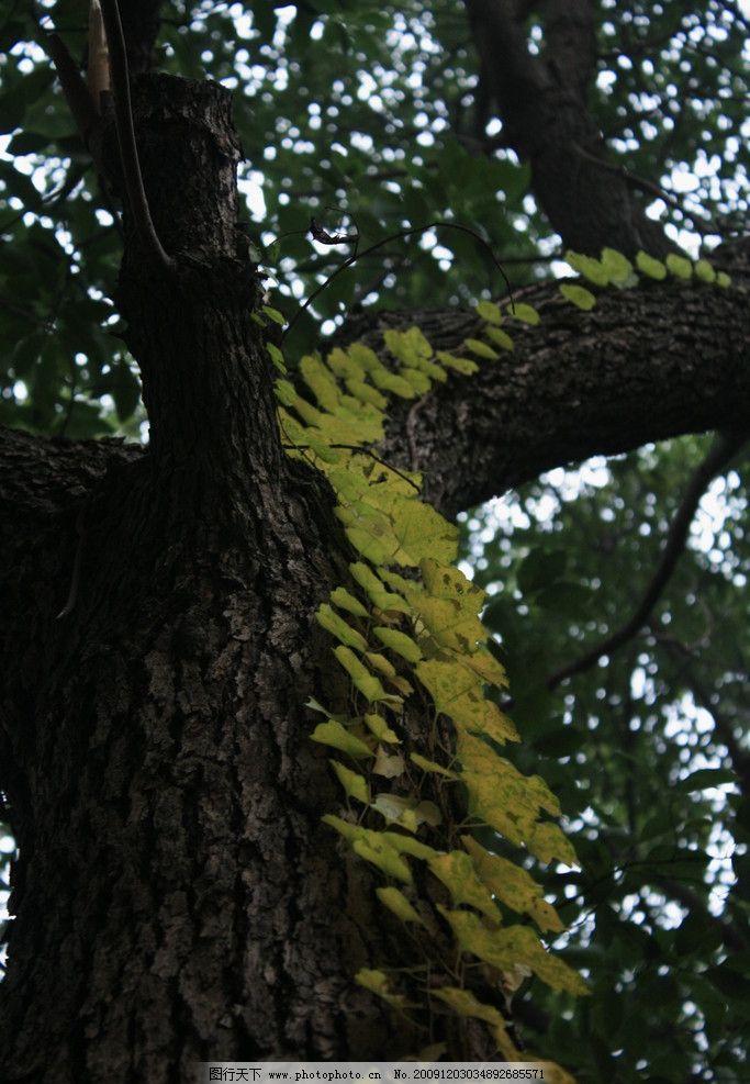 大树 大自然中的大树 图片材料 摄影 树 自然风光 旅游摄影 自然风景