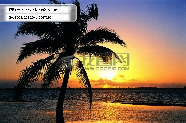 黄昏椰树免费下载 背景 大海 黄昏 素材 椰树 黄昏 椰树 大海 背景