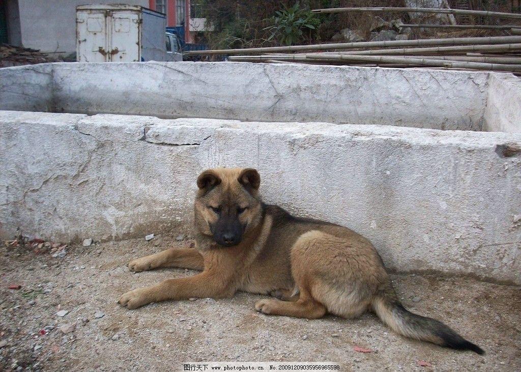 可爱的小狗图片