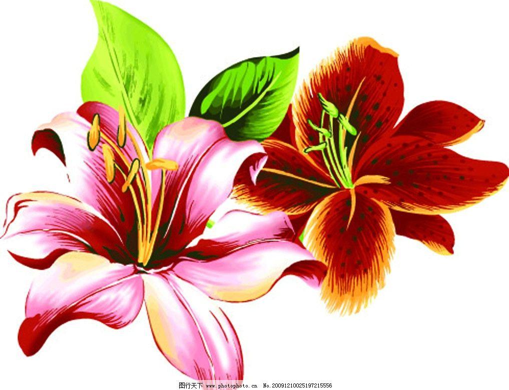 花朵 矢量花朵 百合 花草 生物世界 矢量 ai