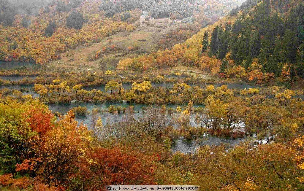 秋林 旅游区 绿野 树林 树木 水草地 植物 金秋时节 山川风光 风景
