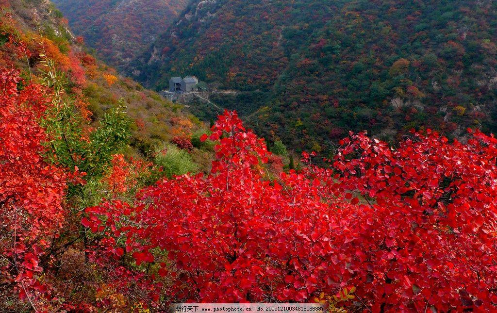 红叶山林 红叶 山 秋天 秋天红叶 自然风景 自然景观 摄影 72dpi jpg