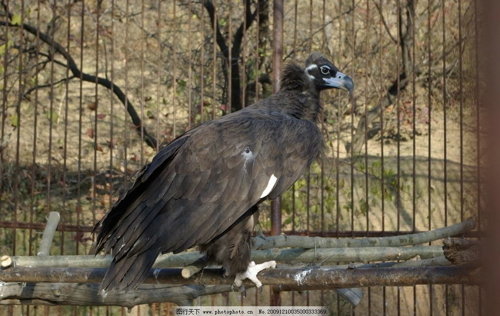 动物园里的鹰图片_野生动物