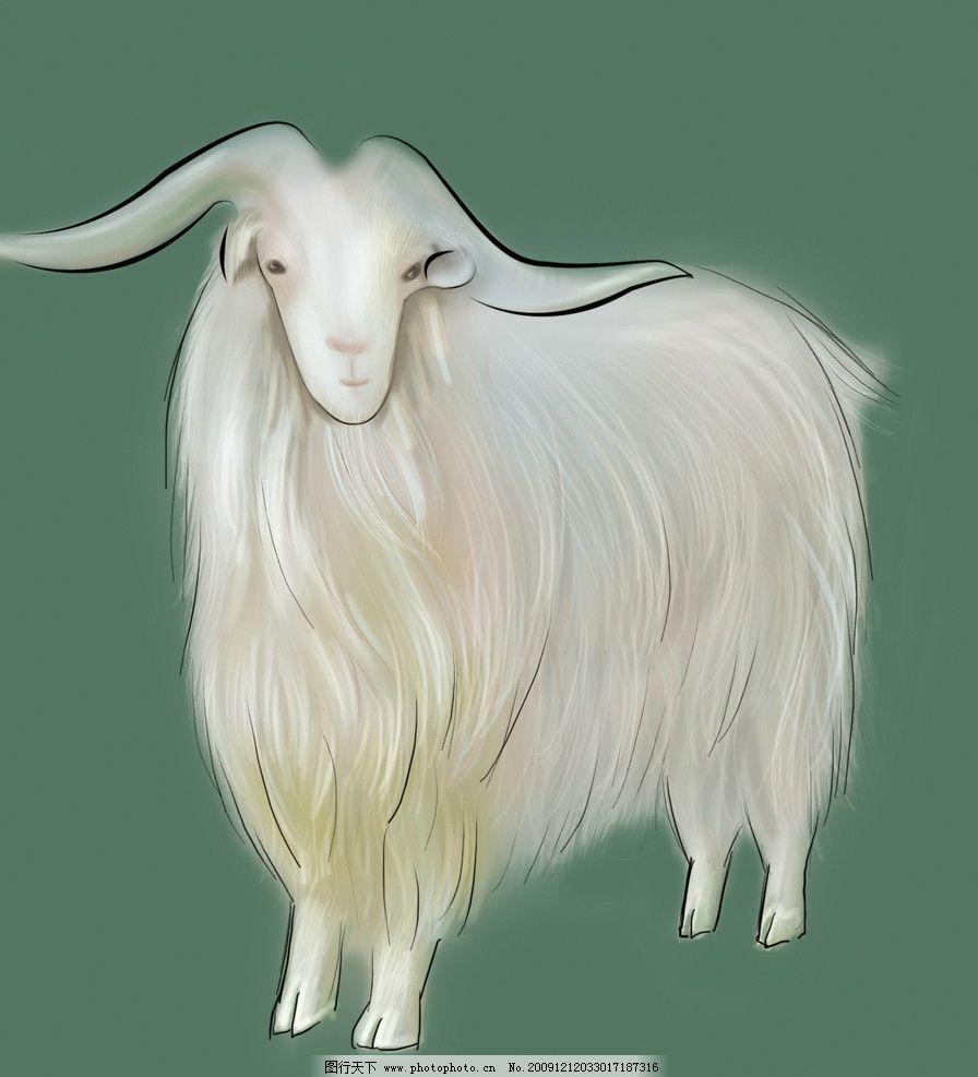 羊 十二生肖图片