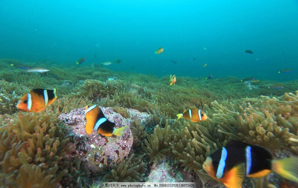 绮丽海底 大自然 景观 景象 生物 水中生物 海底 岩礁 珊瑚 鱼儿 海洋