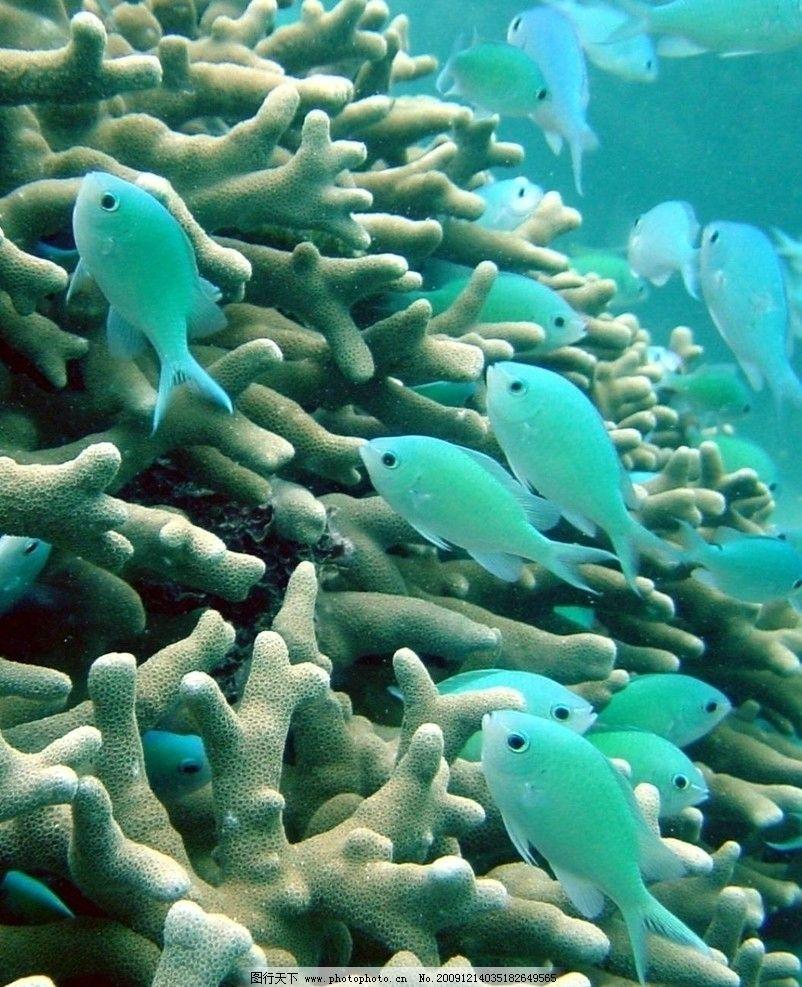 海底世界 海底 鱼 可爱 蓝色 透明 海洋生物 生物世界 摄影 72dpi jpg