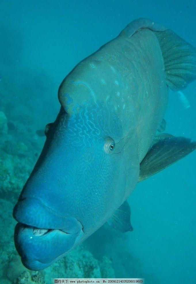 海底世界 海底 鱼 大 罕见 鱼类 生物世界 摄影 72dpi jpg