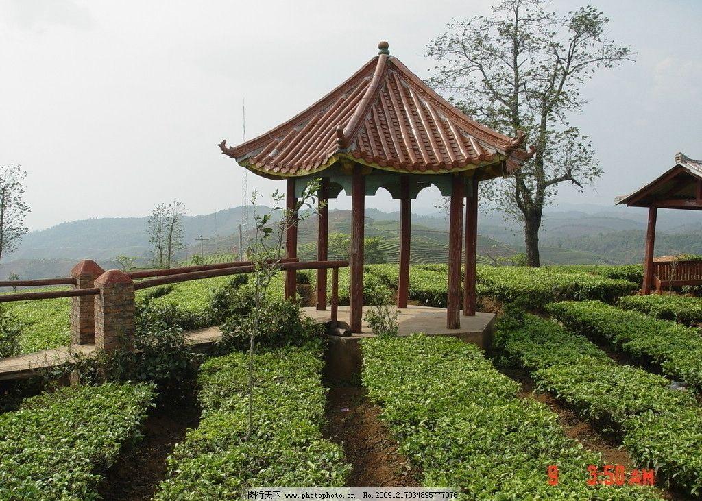 普洱茶 茶园 茶山 茶地 茶芽 凉亭 中国茶城 普洱 古茶树 自然风景