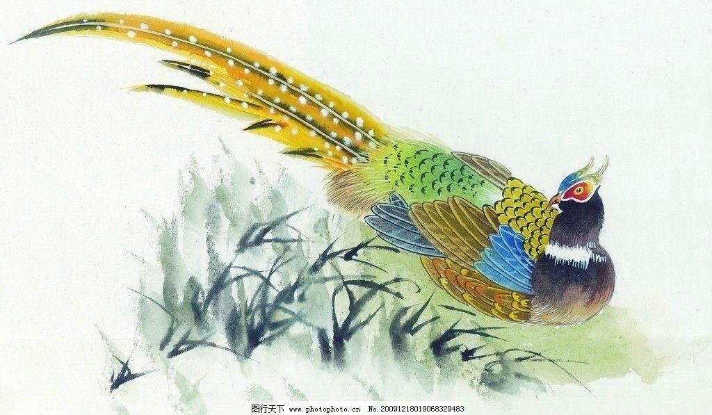 孔雀 工笔 素描 高清 电脑绘画-孔雀牡丹工笔画,孔雀牡丹工笔画壁纸