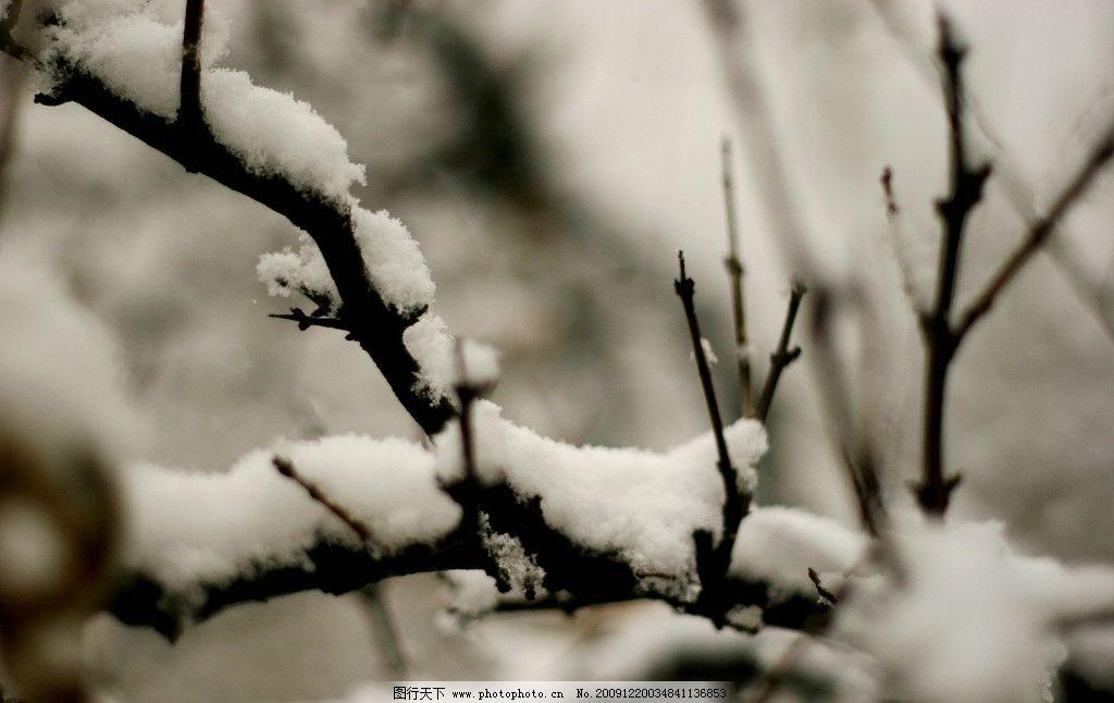 雪榴 石榴树 雪景 大雪     72dpi 冬天 自然风景 自然景观 摄影 jpg