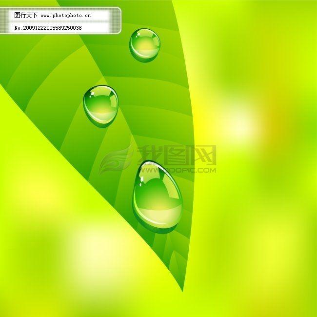 树叶水滴免费下载 树叶