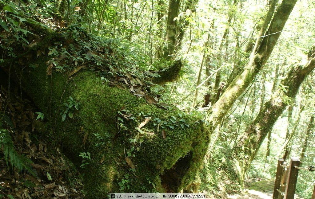 台湾明池生态 台湾 明池 森林游乐园 树干 树木 树阴 山水风景 自然