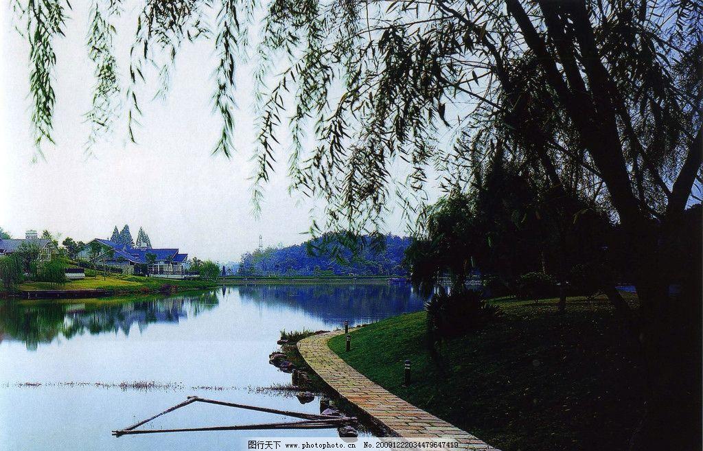 河岸 柳树 远山 山水风景 自然景观 摄影 360dpi jpg