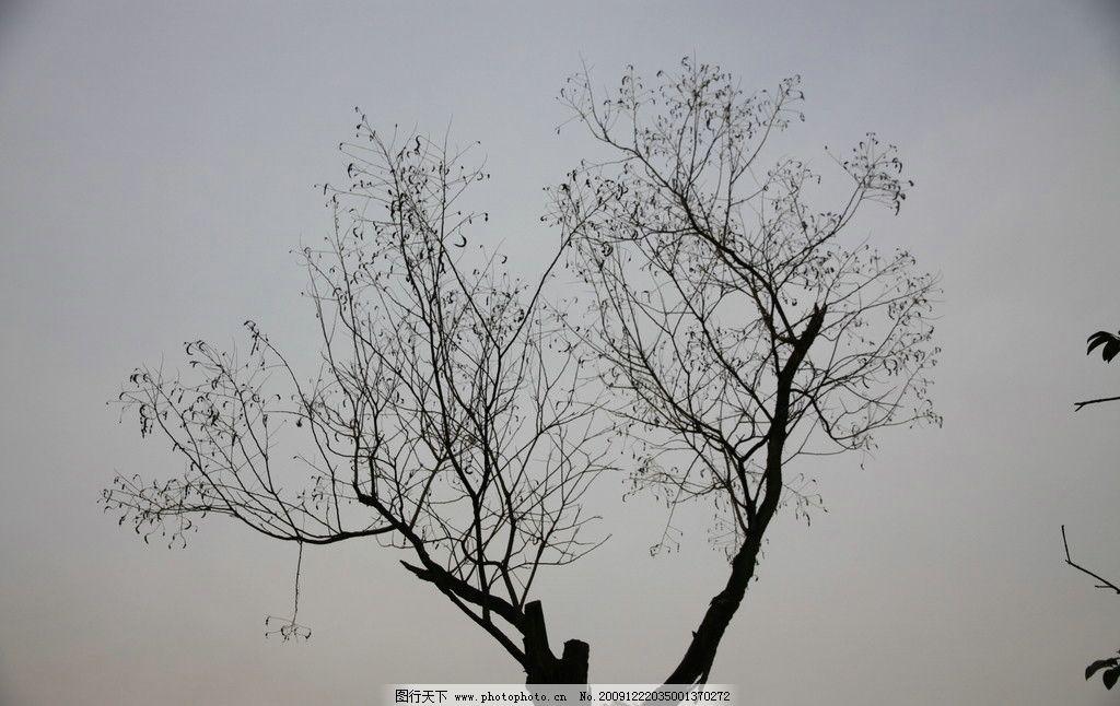 自己拍的公园冬季小树图片