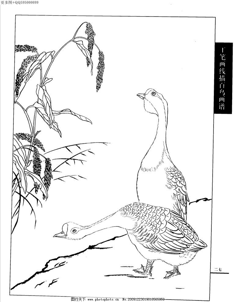 工笔画线描山水画谱 水禽图片