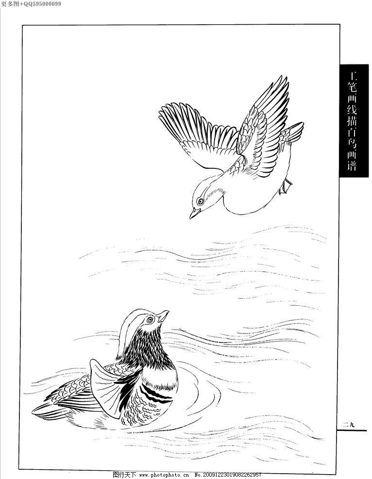 工笔画线描山水画谱 水禽 线描 工笔画 白描 黑白稿 手绘 线描鸟 画谱