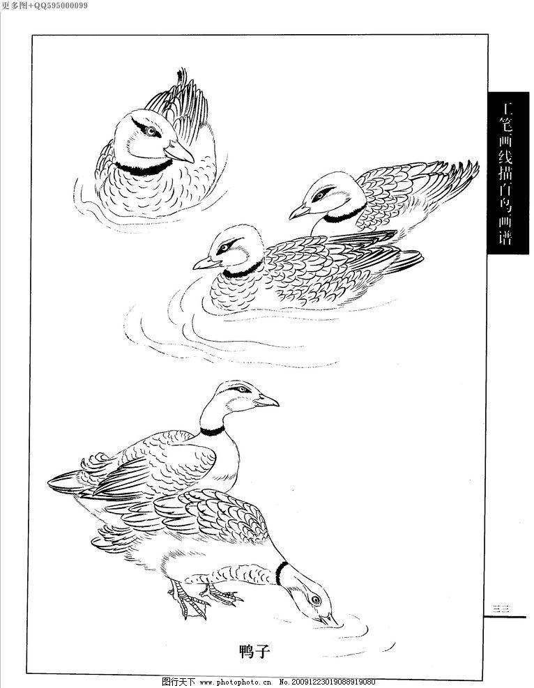 工笔画线描山水画谱 水禽 白描 黑白稿 手绘 线描鸟 绘画 鹤