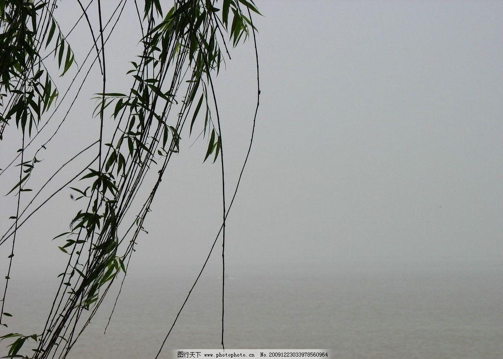 洞庭湖 湖南 长沙 岳阳 旅游 风景 植物 树枝 城市标记 国内旅游 旅游