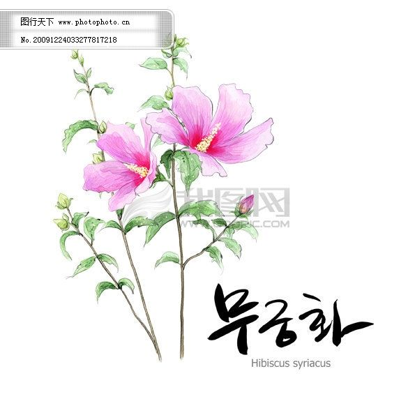 花朵素材免费下载 底纹 花朵 花纹 水彩 水墨画 花朵 花纹 底纹 水墨